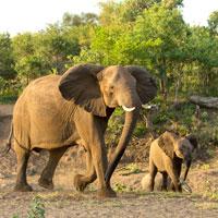 parc kruger voyage afrique du sud agence specialisée