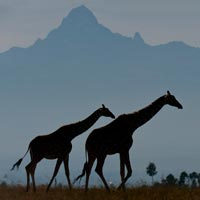 laikipia safari kenya sur mesure agence mungo park