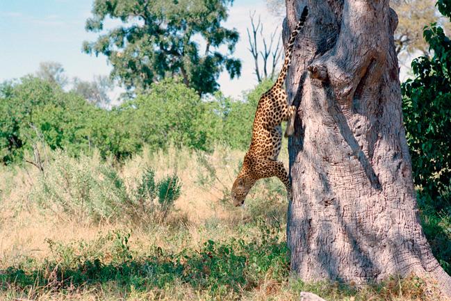 Vos safaris avec Mungo Park