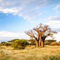 voyage sur mesure limpopo afrique du sud mungo park