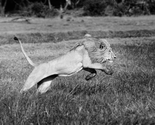 safari exclusif botswana sur mesure luxe afrique delta okavango