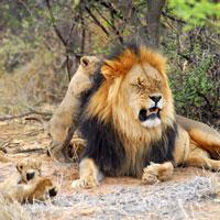 madikwe reserve safari privé sur mesure voyage afrique du sud