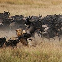 maasai mara safari nyika concession privée safari experts