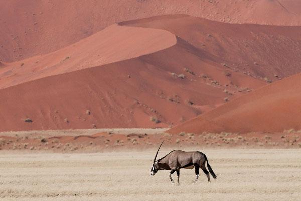 visiter le désert du namib animaux activités