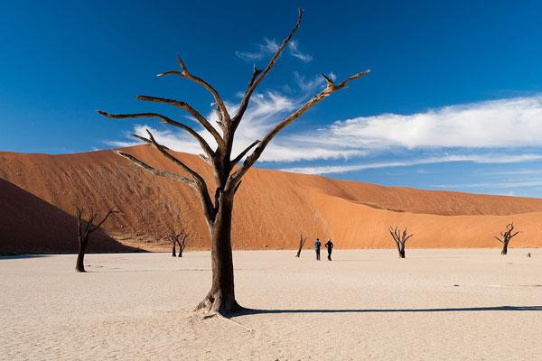 explorer le désert du namib dunes de sable et arbres calcinés