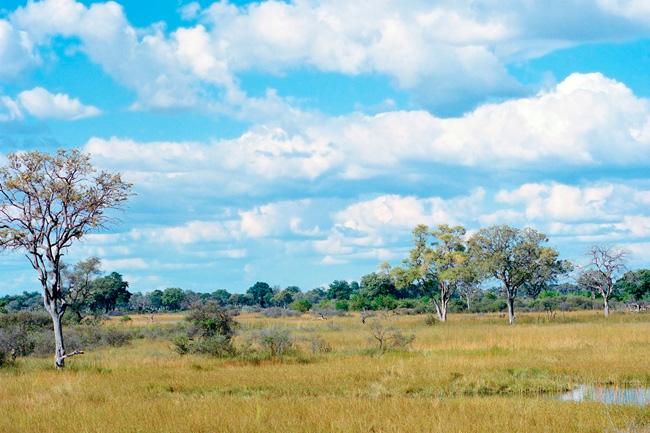 Le delta de l'Okavango avec Mungo Park