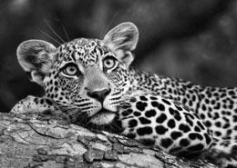 safari afrique du sud mozambique balneaire white pearl phinda agence specialiste
