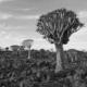 road trip namibie sur mesure agence specialisée mungo park genève suisse