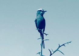 Le meilleur de l'Afrique du Sud, le cap, le Kruger, la plage avec Mungo Park