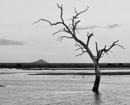 safari tanzanie circuit sud luxe sand rivers selous ruaha rufiji agence sur mesure
