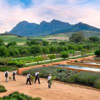 vignobles du cap afrique du sud voyage sur mesure