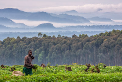 voyage rwanda sur mesure specialiste trekking gorilles