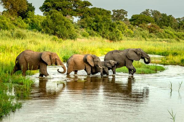 quelle période partir en safari animaux saison densité