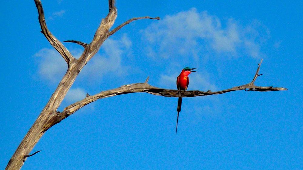 safari afrique oiseaux rare