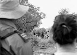 safari pied zambie botswana zimbabwe sur mesure afrique agence