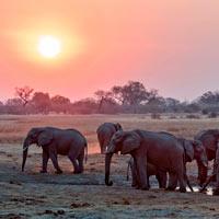 savuti safari exclusif botswana