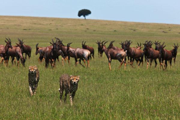 Safari dans le Serengeti en Tanzanie animaux