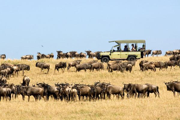 visiter le parc serengeti animaux mirgation gnous Tanzanie safari