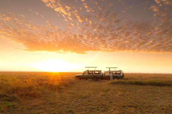 visiter le parc serengeti animaux mirgation paysage saison