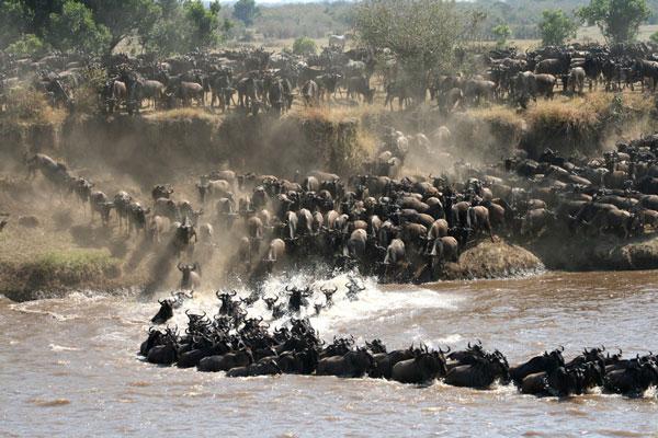 visiter le parc serengeti animaux mirgation Tanzanie Kenya