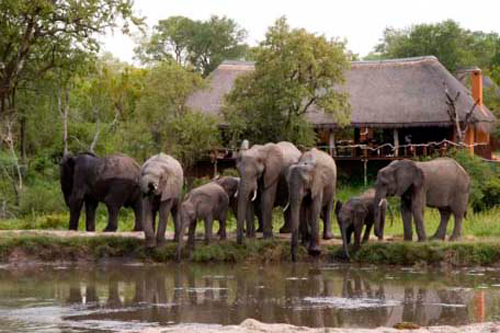 Vue sur les éléphants depuis le lodge en afrique