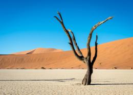 visiter Namibie dunes de Sossuvlei saison activité animaux