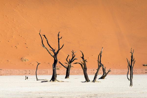 visiter Namibie dunes activité arbres calcinés