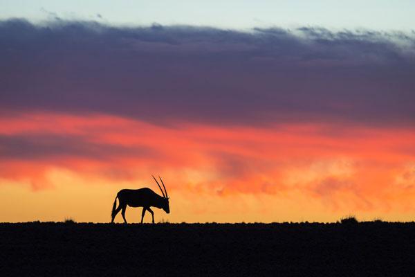 visiter Namibie dunes animaux