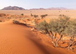 Namibie désert du namib visite activités