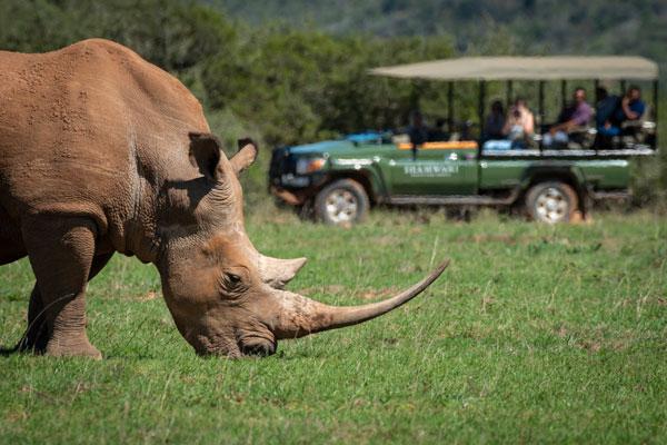 visite Afrique du Sud route des jardins safari animaux