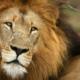 quand partir safari planifier saison animaux Afrique