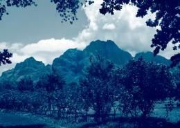 Voyage en Afrique du Sud - LE CAP avec Mungo Park