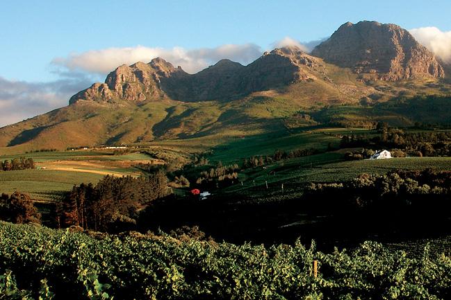 Les vignobles du Cap avec Mungo Park