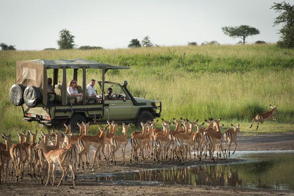 saison safari mois animaux quand partir