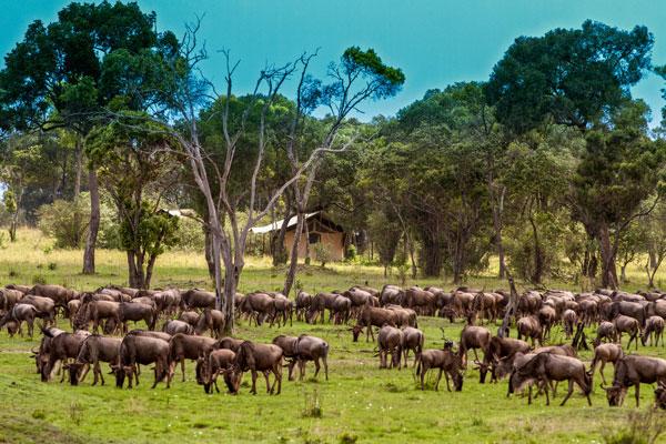 saison safari mois animaux migration