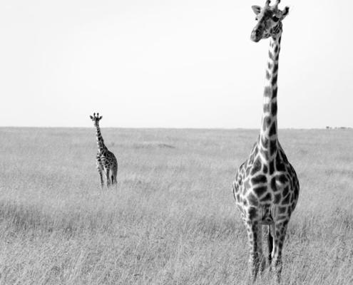 tanzanie circuit serengeti safari migration gnous agence specialisee afrique