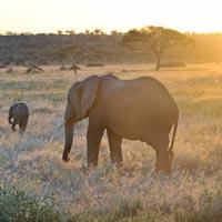 tarangire parc national tanzanie safari sur mesure afrique specialiste