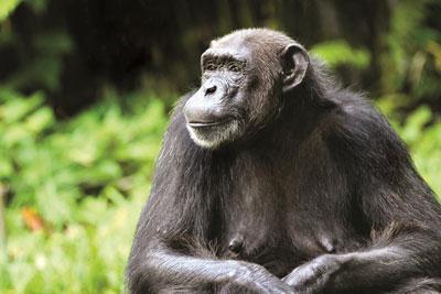 safari afrique ouganda gorilles chutes du nil