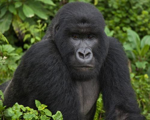 voyage sur mesure ouganda
