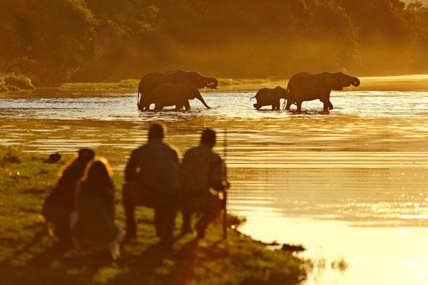 quand partir en safari saison animaux éléphants
