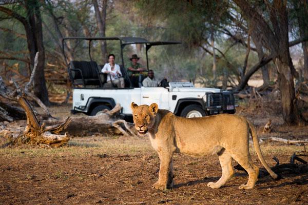 quelle période partir en safari animaux saison